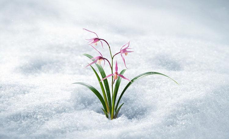 Изображение на ГЕЛ ЗА ЛИЦЕ С ОРХИДЕЯ Innisfree Jeju Orchid Gel Cream 50мл