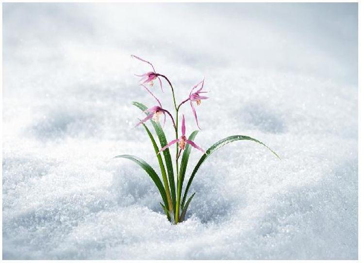 Изображение на ИНТЕНЗИВЕН КРЕМ ЗА ЛИЦЕ С ОРХИДЕЯ Innisfree Jeju Orchid Intense Cream 50мл